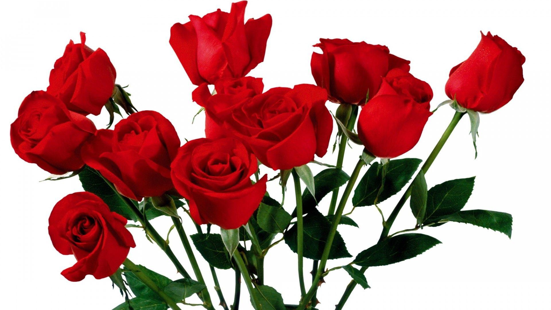 Flowers Flower Red Roses Wallpaper Image Wallwuzz Hd