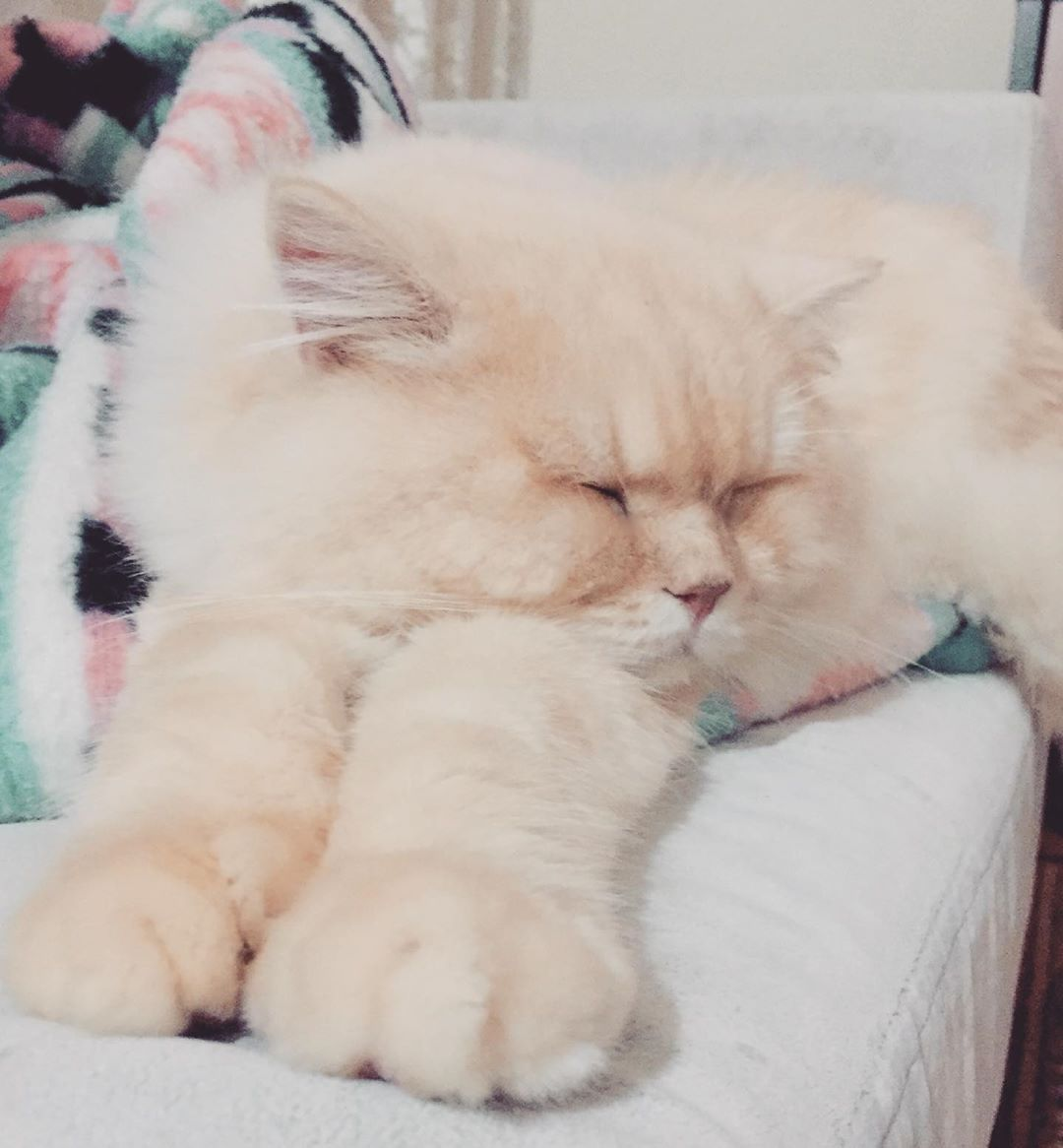 Koca patilim 🥰#amazing #followme #all_shots #textgram #family #instago #igaddict #awesome #girls #instagood #my #bored #baby #music #red #green #water #harrystyles #bestoftheday #black #party #white #yum #flower #2020 #night #instalove #cat