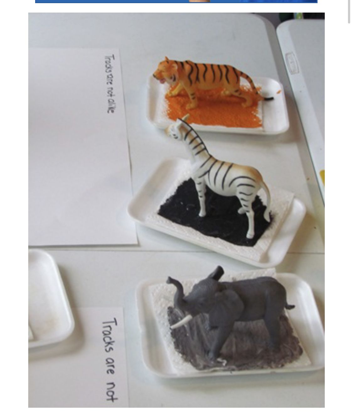 Animal Tracks With Images