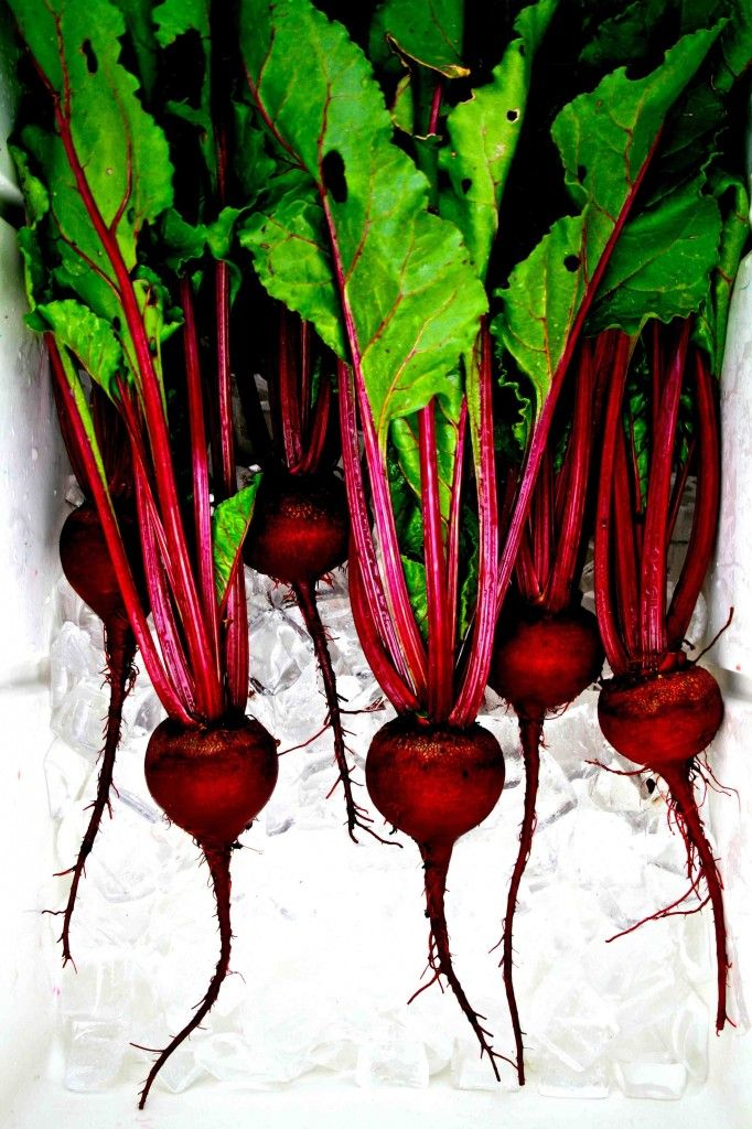 The color of goodness plants garden guide and gardens beet bonanza these beets were grown from seed obtained from the thomas jefferson center for solutioingenieria Image collections