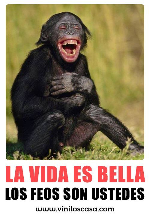Pin By Paul Serrano On Memes Funny Animal Jokes Monkeys Funny Funny Monkey Pictures