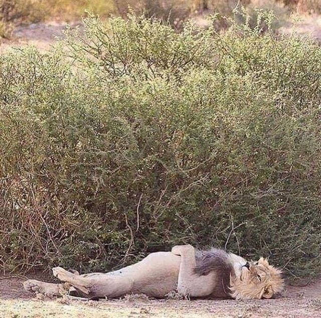 Photo of Don't disturb me! I am on duty – Imgur – #disturb #Don39t #duty #Imgur #sleep