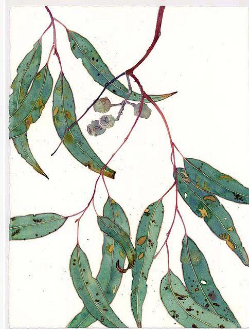 Gum Leaves Botanical Drawings Botanical Art Botanical Illustration
