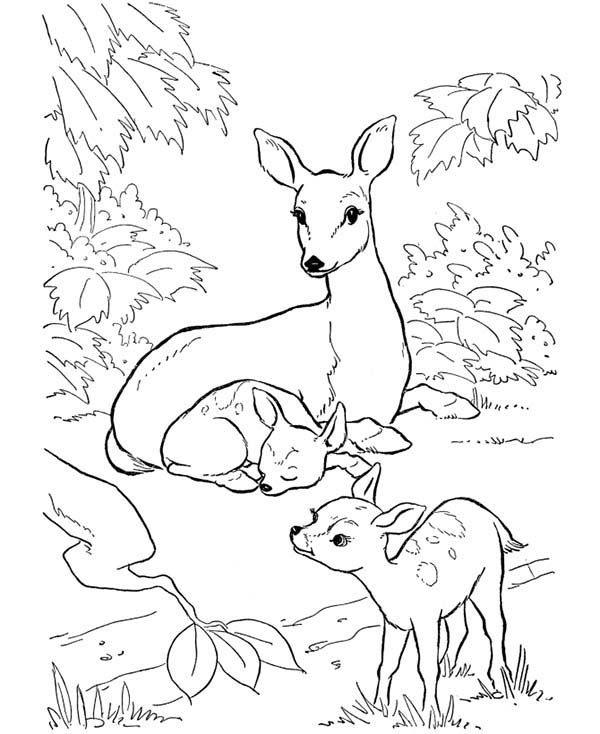 deer deer mother and her two fawns coloring page