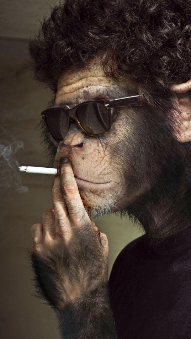IPhone 6 Monkey Wallpapers HD Desktop Backgrounds 750x1334