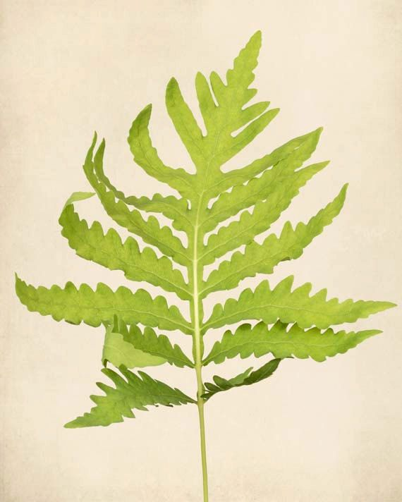 Botanical Art, Fern Print, Wall Art, Nature, Woodland, Fine Art ...
