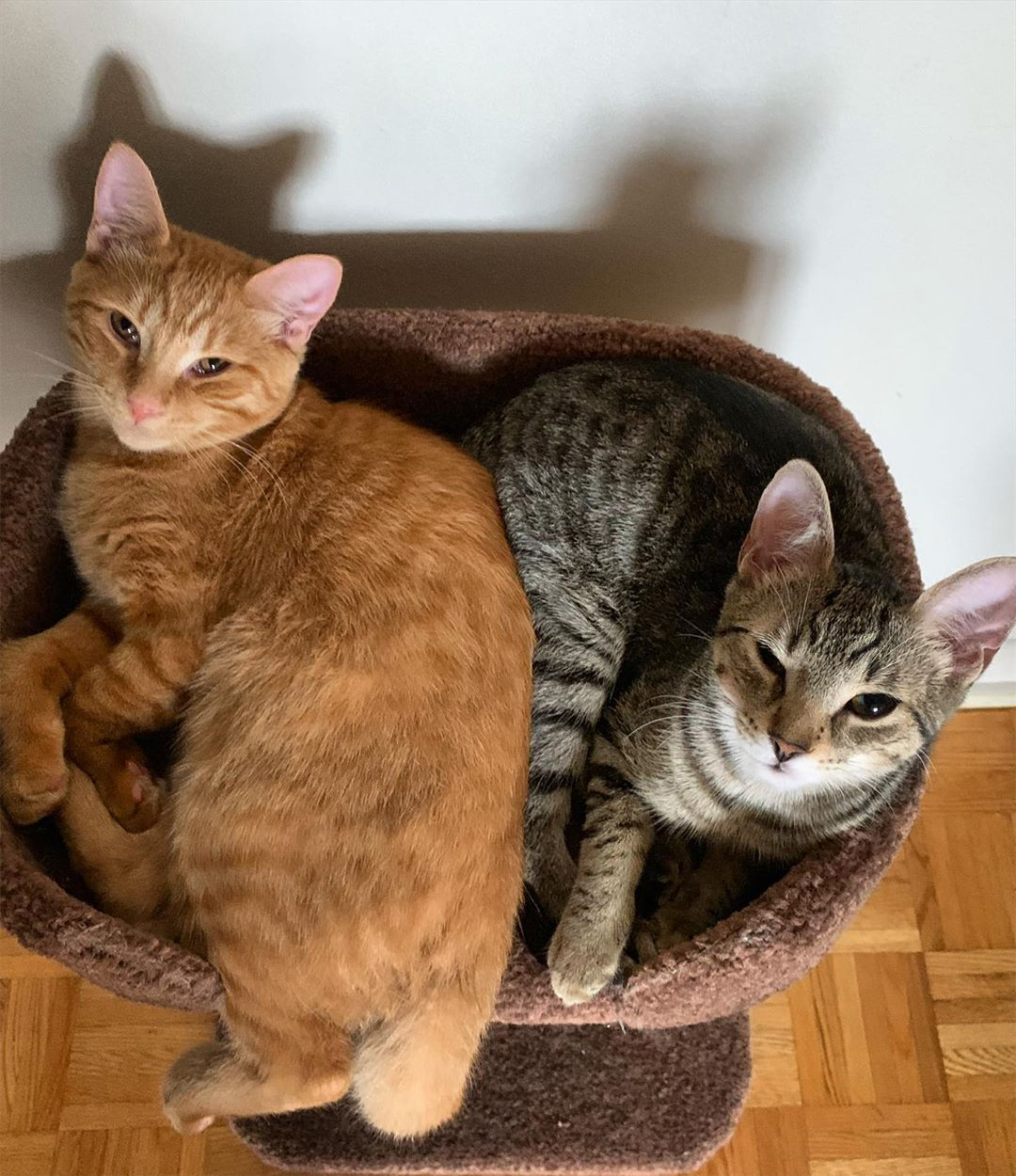 Click Here To See Why Orange Tabby Cats Of Instagram Kittens