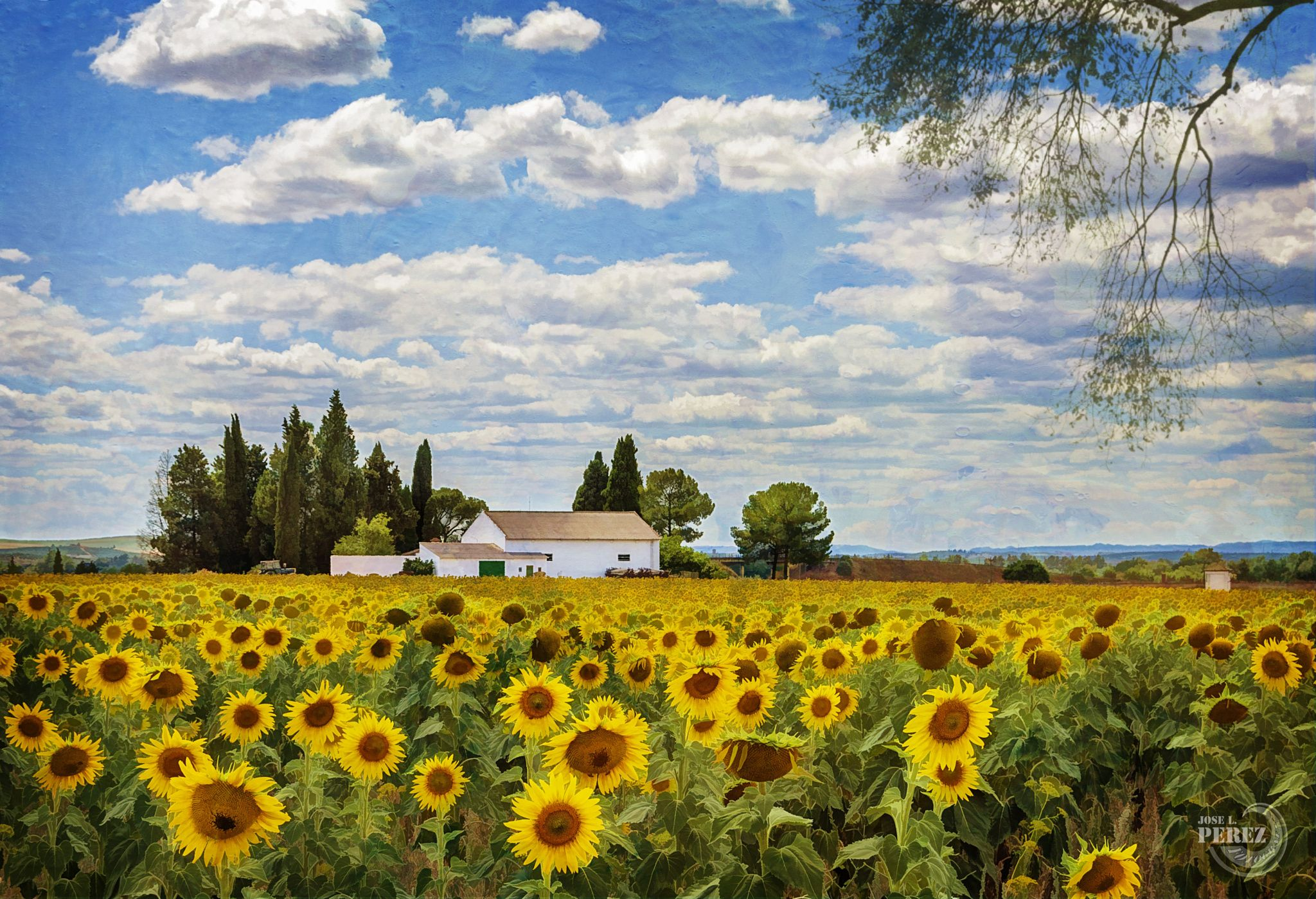 Campo De Girasoles Natural Landmarks Country Life Painting
