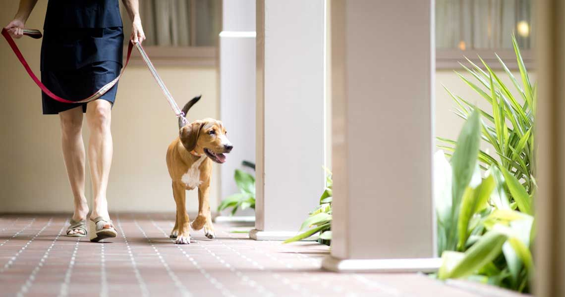 Bring Your Dog Along To Experience The Pet Friendly City Of Charleston With The Kings Courtya Kings Courtyard Inn Downtown Charleston Hotels Charleston Hotels