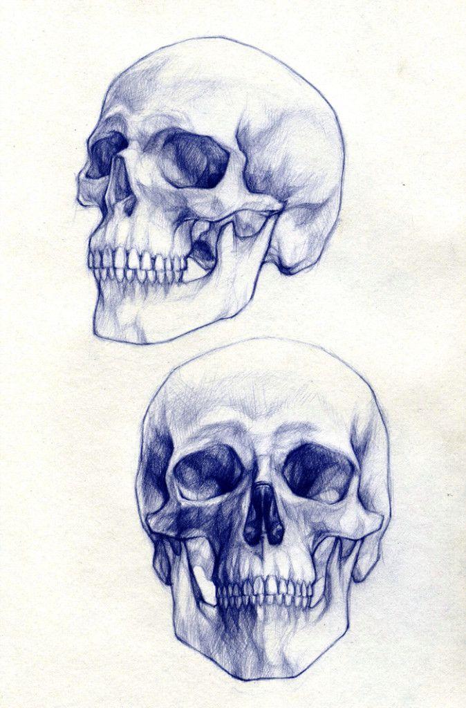 Skull drawings 1   Cráneo - Cabeza - Proporciones   Pinterest ...