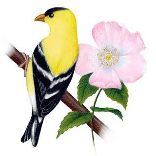 Wild Prairie Rose State Flower Of Iowa State Birds Bird