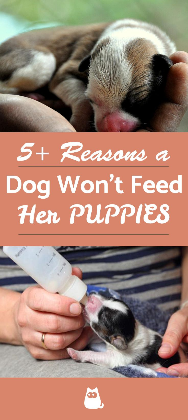 My Dog Won't Feed her Puppies Causes and What to Do