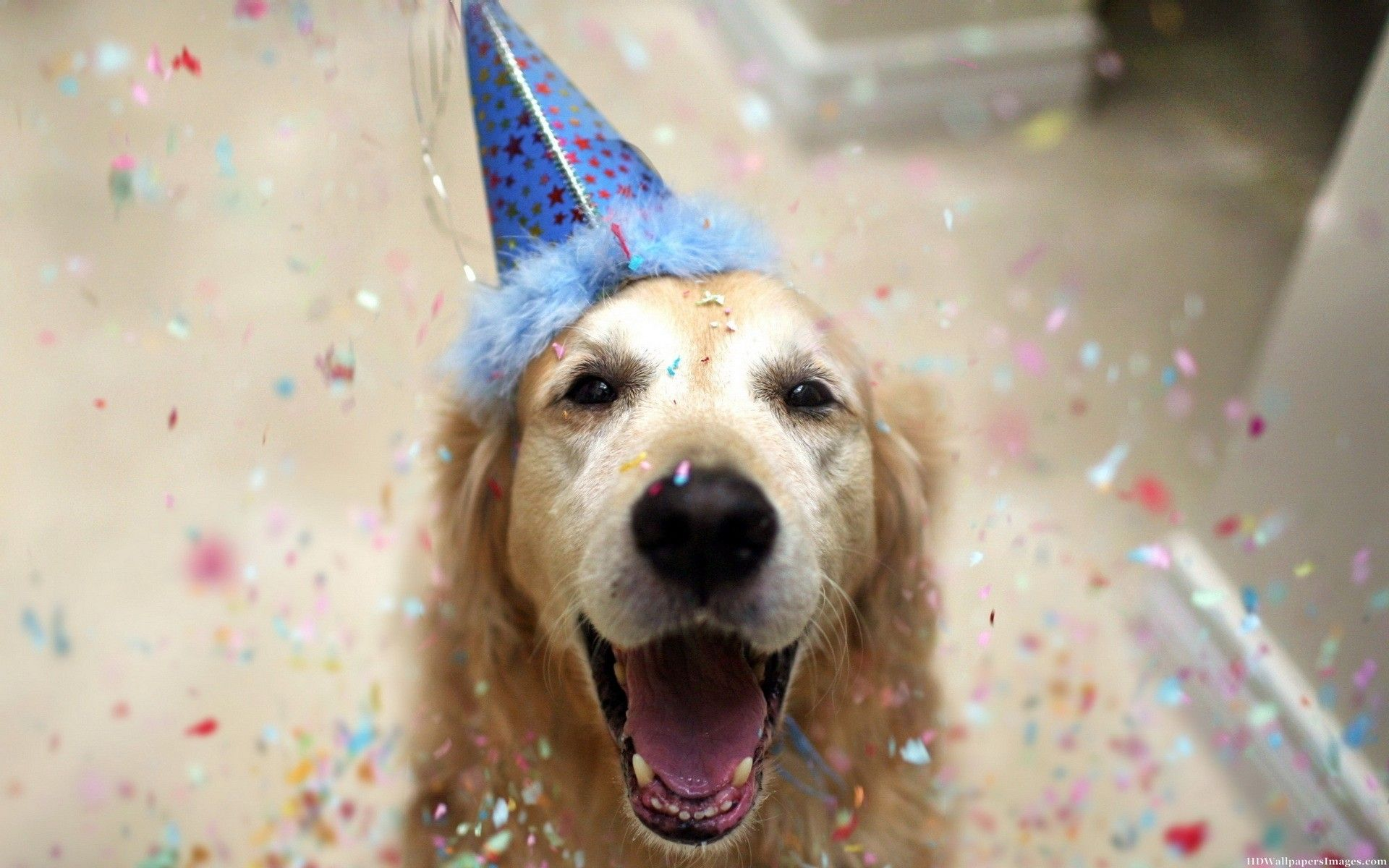 Happy Birthday Animal Dog Funny Images | HD Wallpapers ... - photo#14