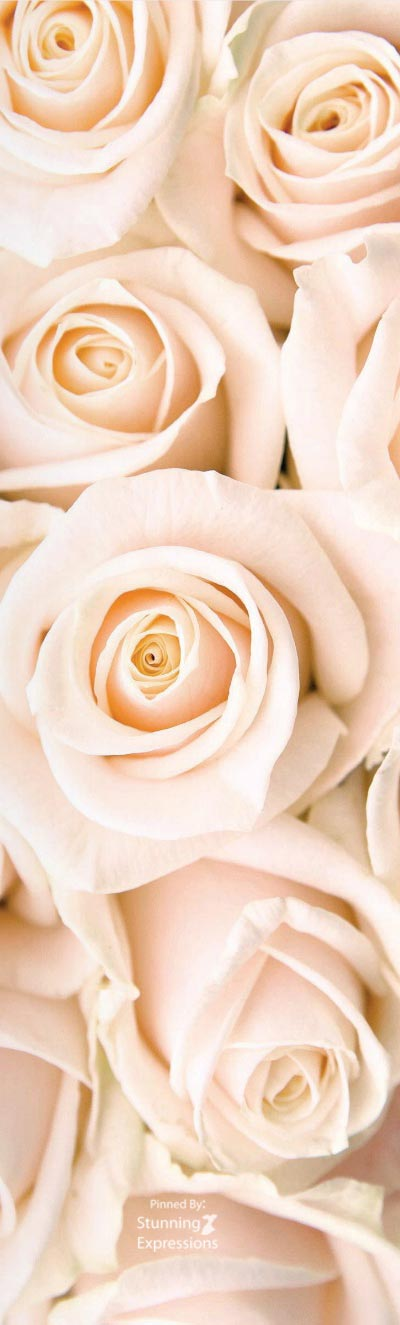 Pin By Stunning Expressions On Blush Color Rose Gold Wallpaper White Roses Wallpaper Flower Wallpaper Beautiful rose gold roses wallpaper for