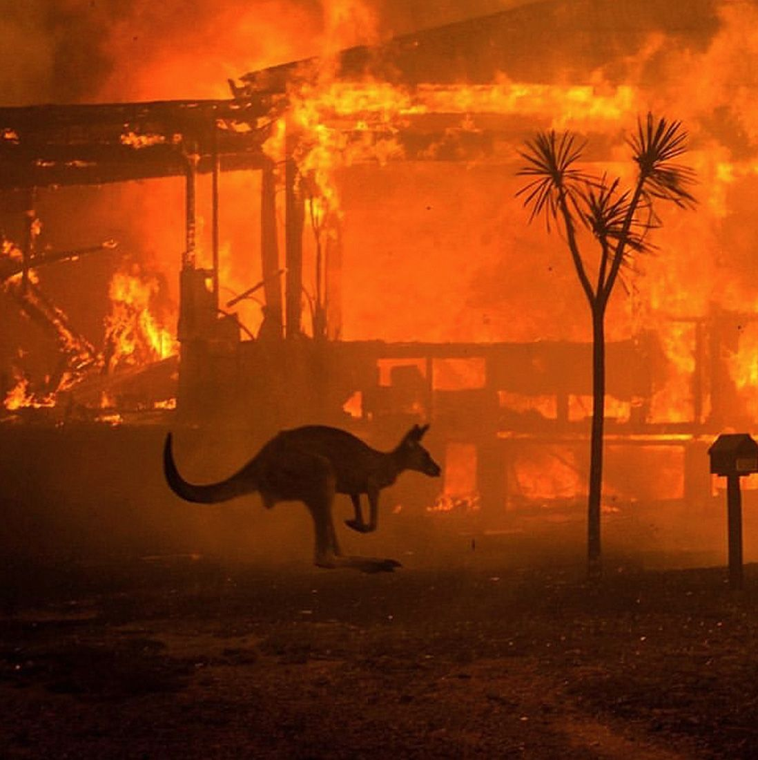 Bush Fire in Australia en 2020 Australia animales