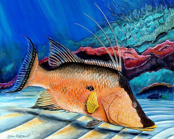 Hogfish painting by Steve Ozment - acrylic on wood