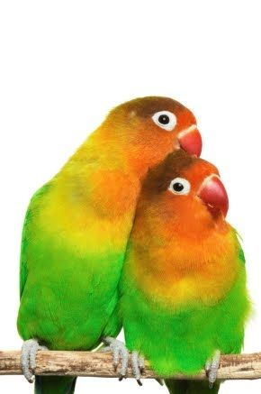 peartreedesigns: Beautiful Natural Colours Love Birds Photos, Free ...