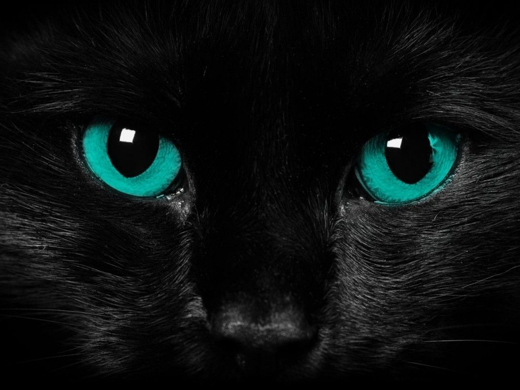 a pitch black she-cat with smoky grey paws, bright green eyes and