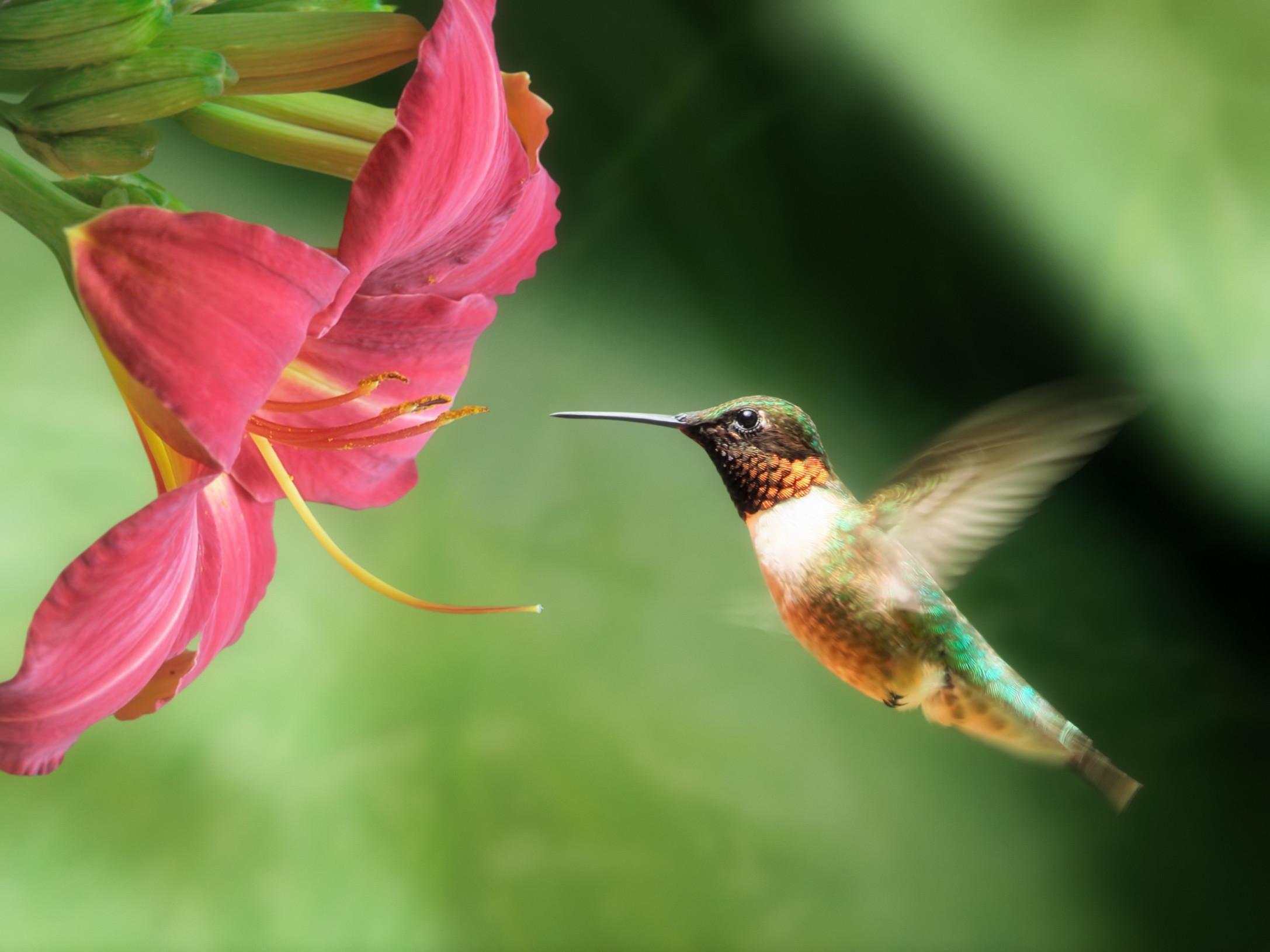 картинки с птичками колибри пути водопаду