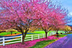 Image Result For Spring Nature Wallpaper Beautiful Nature Spring Beautiful Nature Spring Nature