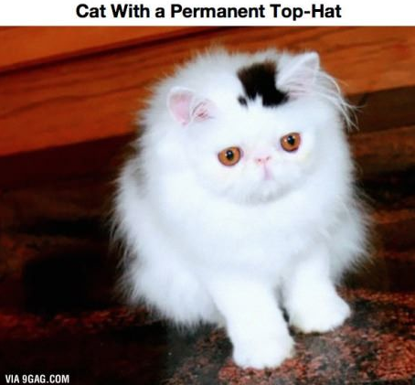 top hat cat