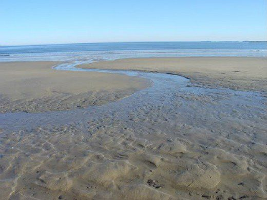 Check out the area at low tide, return at high tide