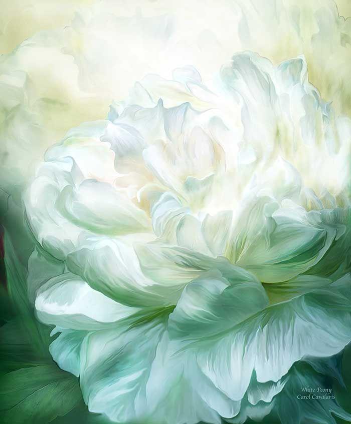 Carol Cavalaris . White Peony