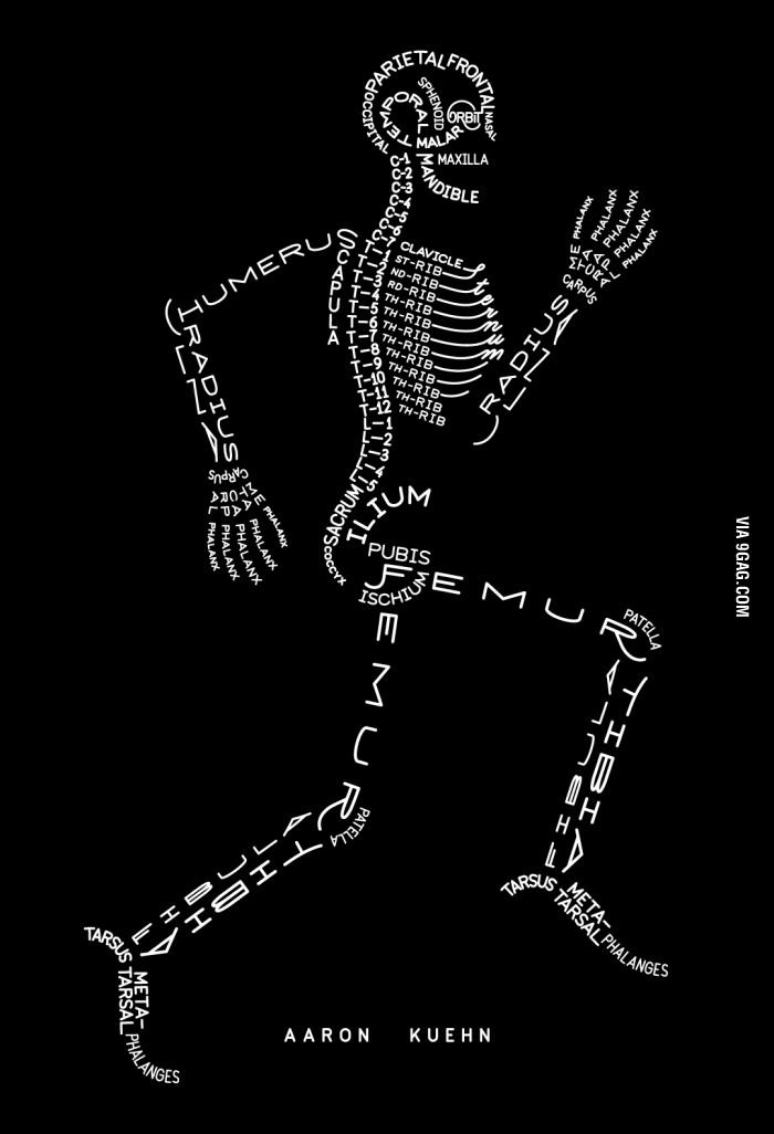 Anatomy Bones | Esquelas, Dia de muertos y Cuadro