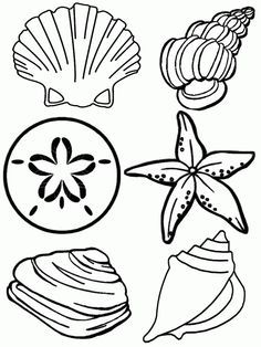 Free Printable Seashell Coloring Pages For Kids Summer Coloring Pages Beach Coloring Pages Free Coloring Pages