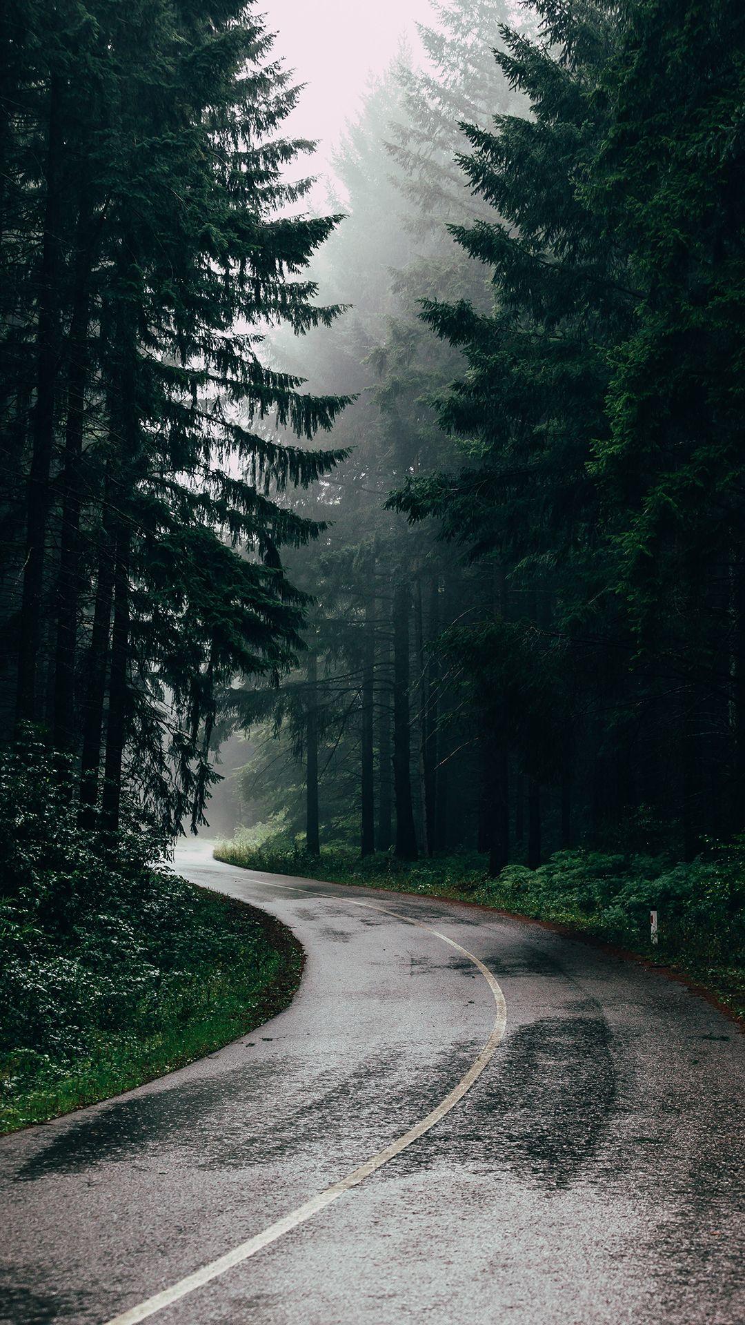обои ноябрь 2019 лес асфальт зеленый дорога forest road rain autumn november wallpaper