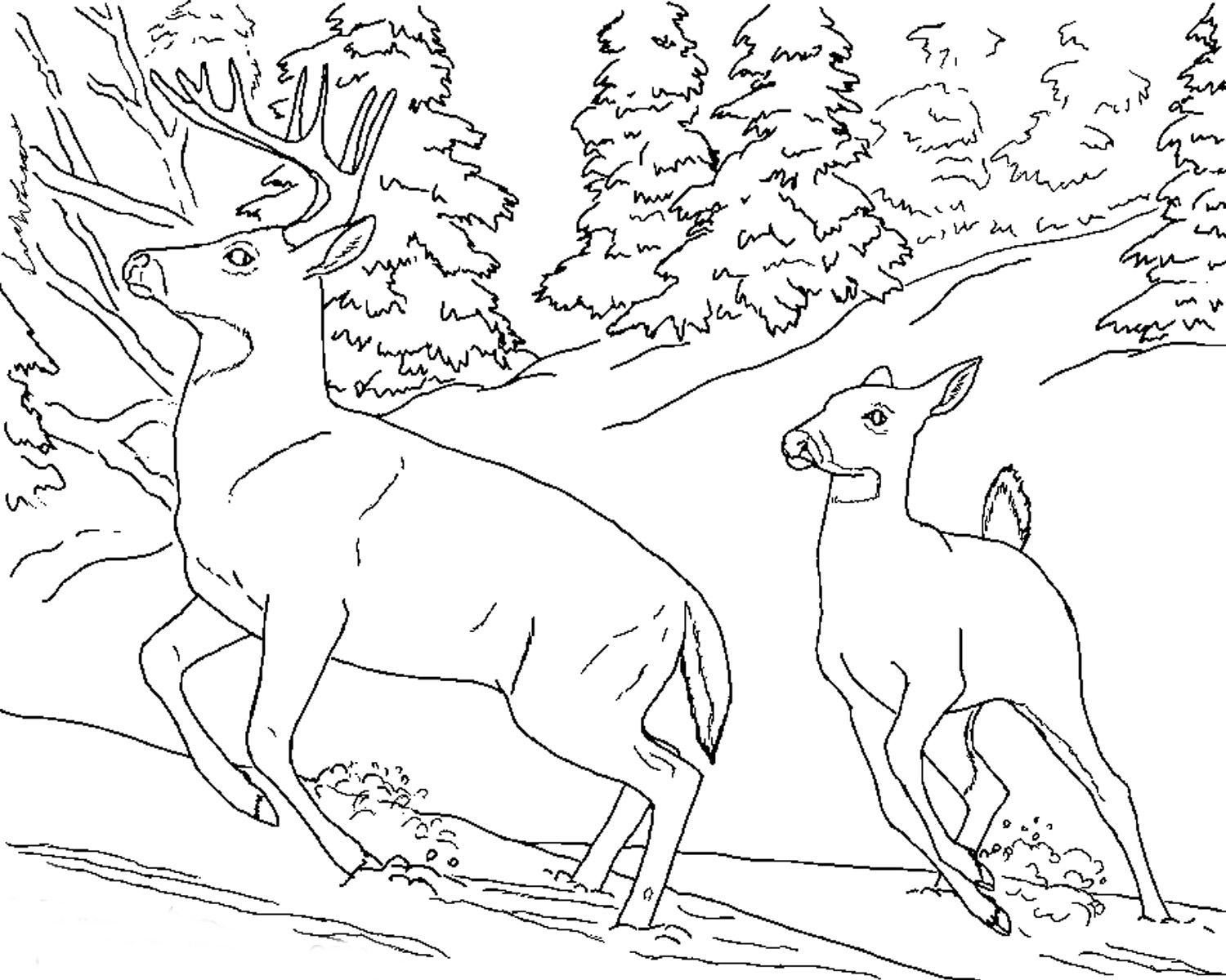 Free Coloring Pages Download Realistic Of Animals Deer Animal