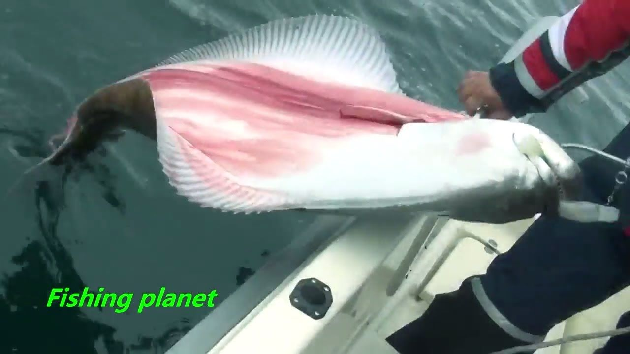 Crazy big fish caught at deep sea amazing big sea fish for Crazy fishing videos