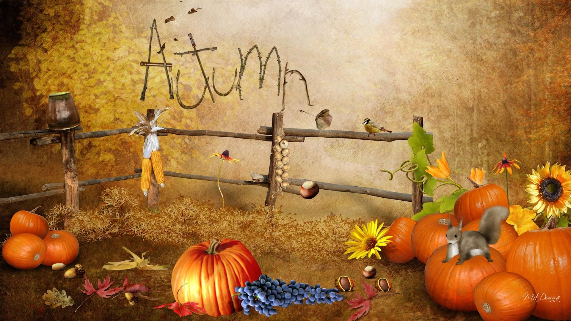 Finest Autumn Happenings Download Wallpaper For Mobile