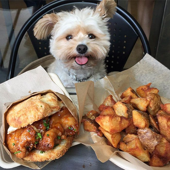 Popeye The Foodie Dog Dogs Homeless Dogs Popeye