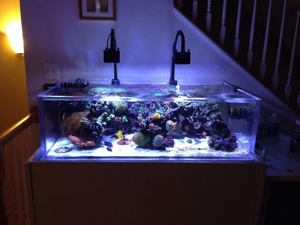reef tank google search shallow reef tank pinterest On shallow fish tank