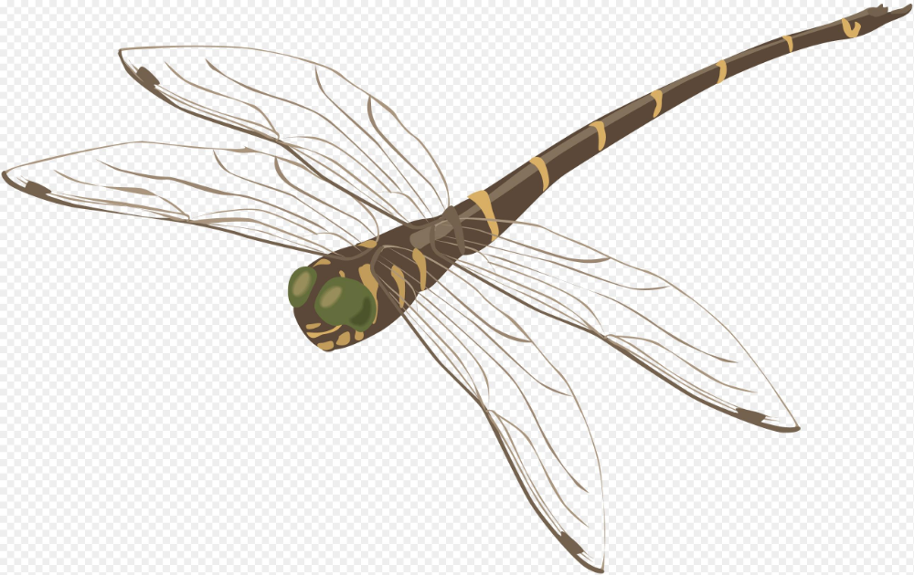 Dragonfly Facts Png 32 Dragonfly Png Images Free To Download 2582 1628 Png Download Free Transparent Background Drag Dragonfly Facts Dragonfly Png Images