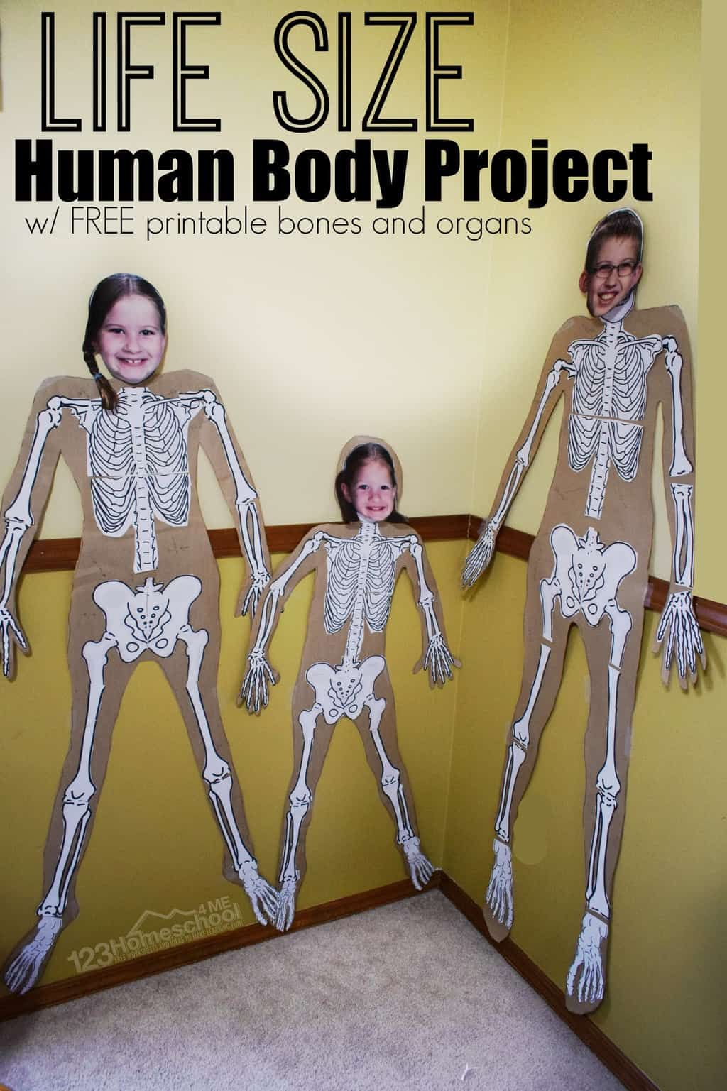 Human Body Project With Free Printables In