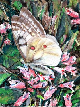 """Skipper Butterfly"" Prints NOW available on Saatchi Art"