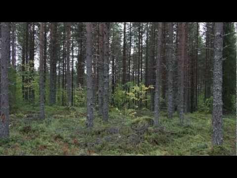 Kannolta kattilaan - Energiapuun kulku - YouTube