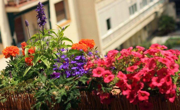 Plantas para ganar privacidad en balcones