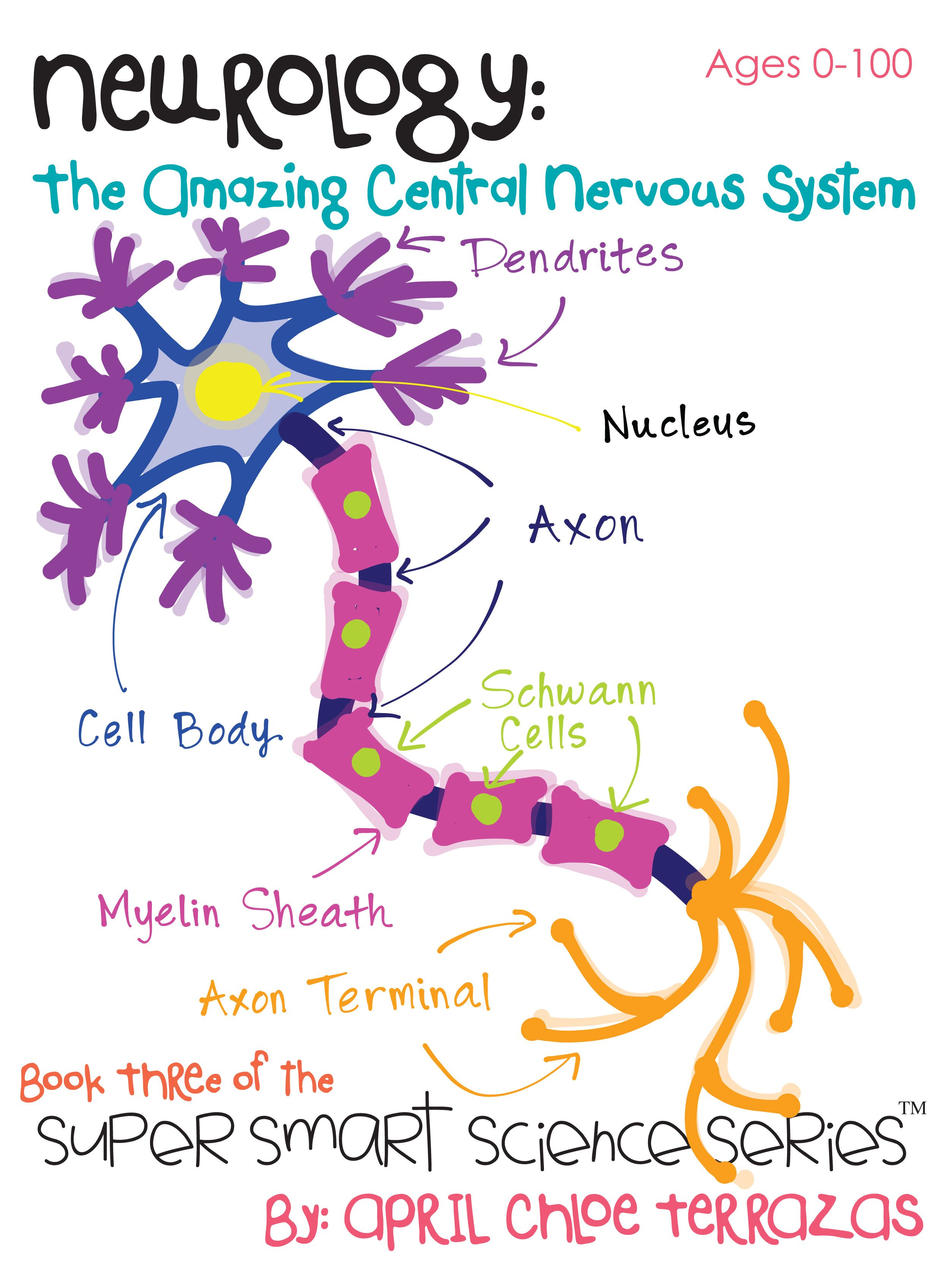 Kids Can Explore The Central Nervous System In This