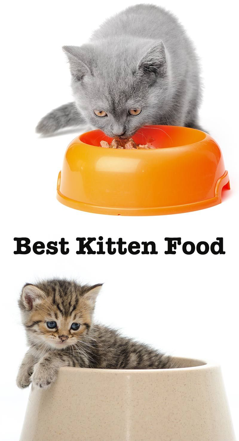 Looking For The Best Kitten Food For Your Tiny New Friend Kitten Food Kitten Food Brands Kitten