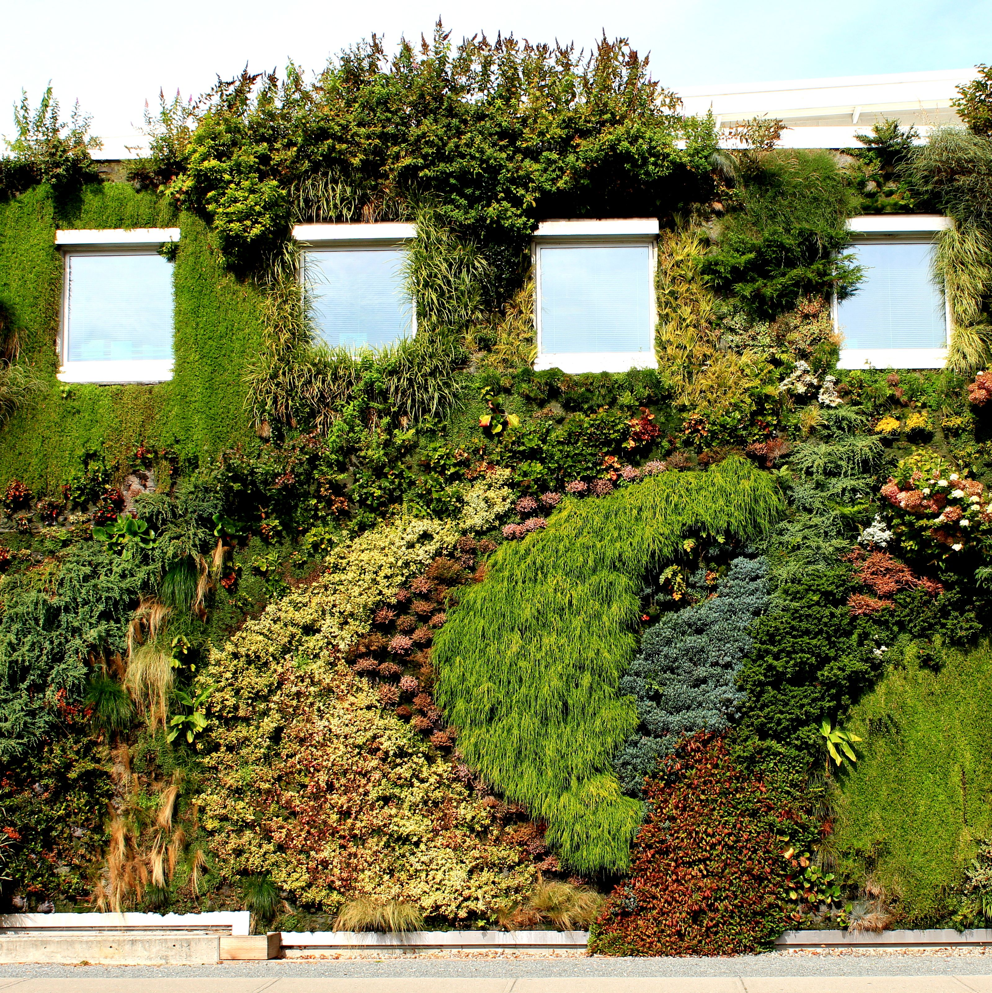 Green Wall At Semiahmoo Library. Surrey, BC. Design By Green Over Grey  Artist Images