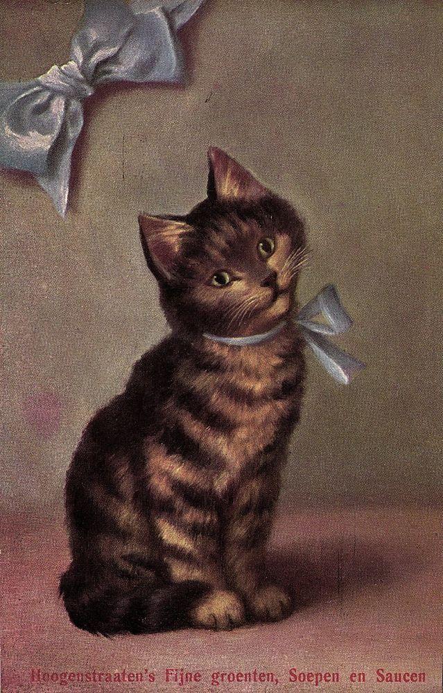 Cute cat with ribbon Sperlich artist postcard Ca 1910's