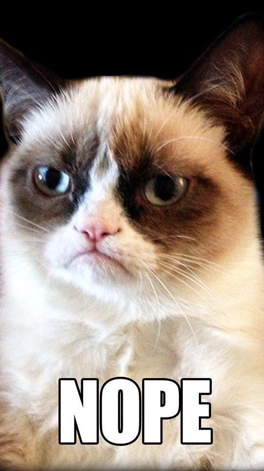 humour a cats humorcat memesgrumpy