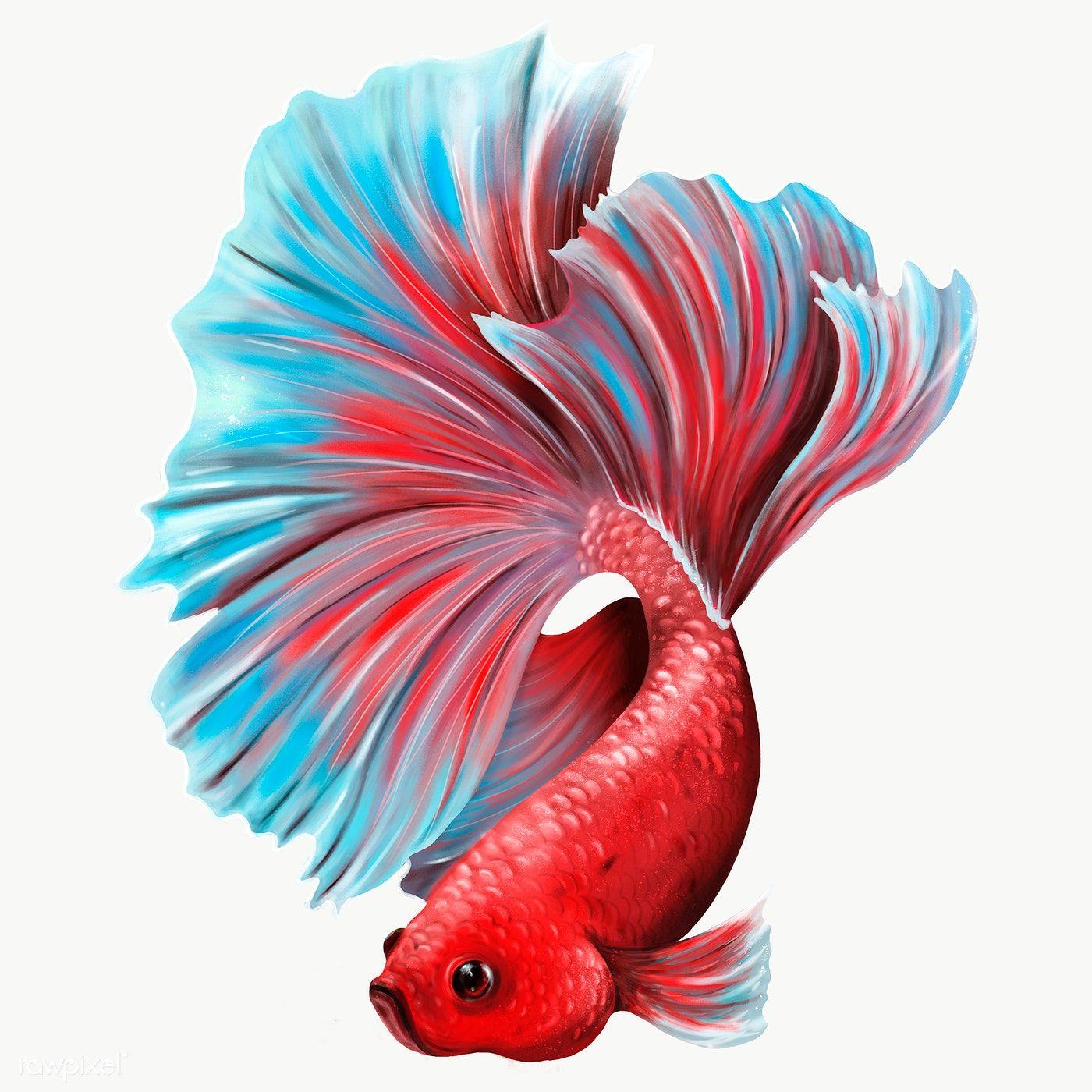 Colorful Betta Fish Design Element Premium Image By Rawpixel Com Te In 2021 Betta Fish Betta Fish Sketch