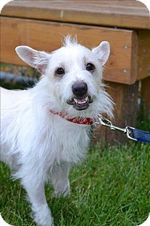 Delaware Oh Norwich Terrier Mix Meet Geronimo A Dog For Adoption Http Www Adoptapet Com Pet 18389290 Delaware Ohio Pets Norwich Terrier Kitten Adoption