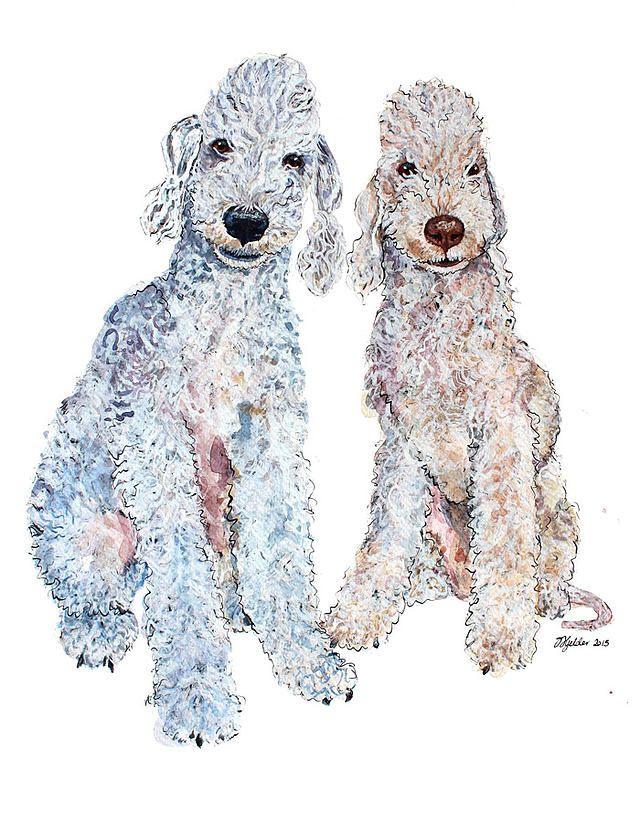 Bedlington Terrier - drawing   Animal paintings, Dog crafts ...