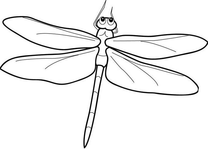Detailed Dragonfly Coloring Printout - Dragonfly cartoon ...