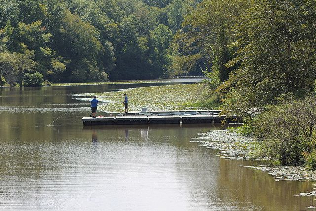 Fishing On Swift Creek Lake At Pocahontas State Park In Virginia State Parks Park Science And Nature